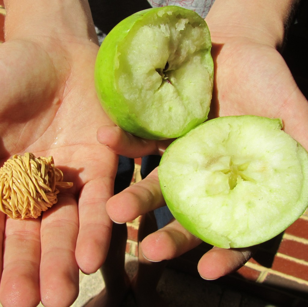 A split apple and a ball of knotted, sticky rubber bands.